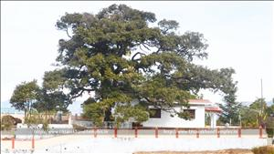 सुरसिंह मन्दिर, कण्डा, नई टिहरी टिहरी गढ़वाल